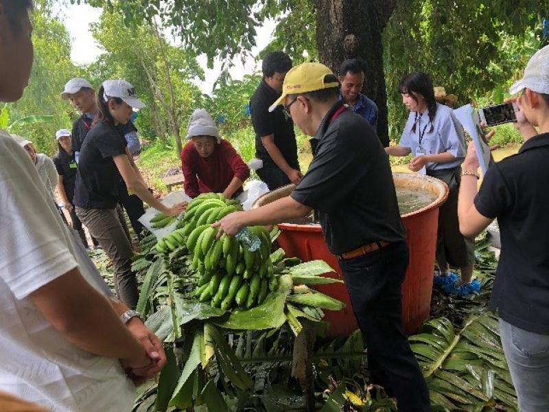 バナナ農園での農業体験